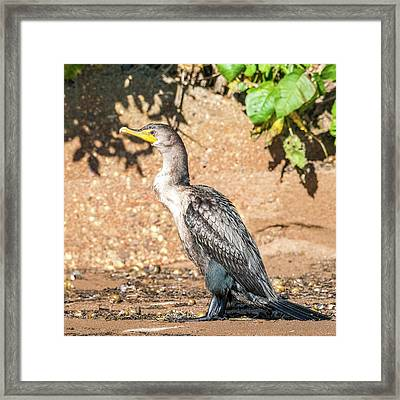 Framed Print featuring the photograph Cormorant On Shore by Paul Freidlund