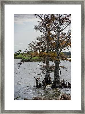Framed Print featuring the photograph Cormorant by Paul Freidlund
