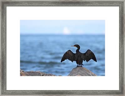 Cormorant Port Jefferson New York Framed Print