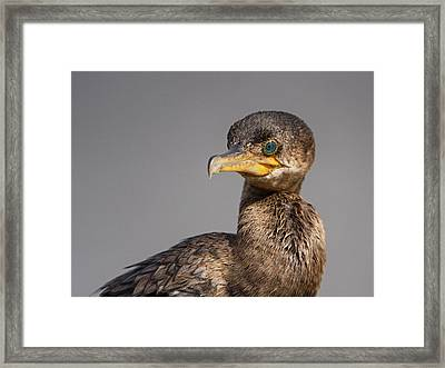 Cormorant Portrait Framed Print