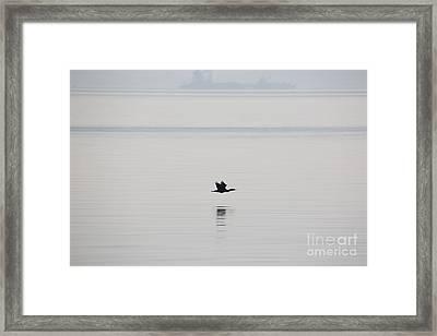 Cormorant River Peace Framed Print
