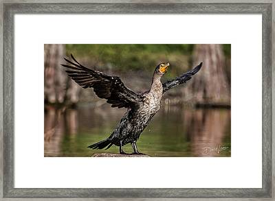 Cormorant Shaking Off Water Framed Print