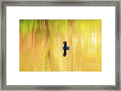 Double Crested Cormorant With Crazy Hair Framed Print by Charline Xia
