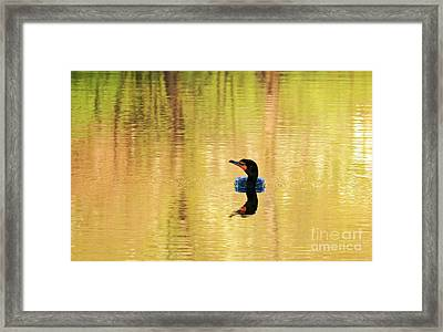 Cormorant With Reflections Framed Print by Charline Xia