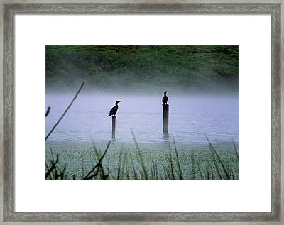 Cormorants Framed Print