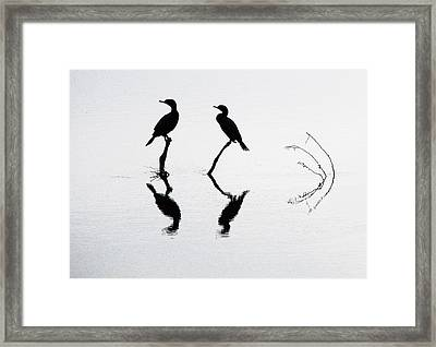 Cormorants At Rest Framed Print