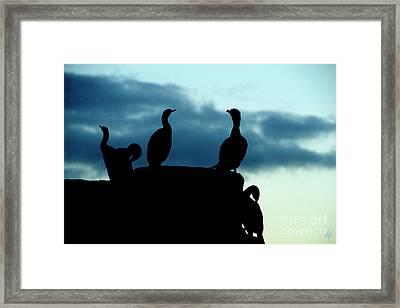 Cormorants In Silhouette Framed Print