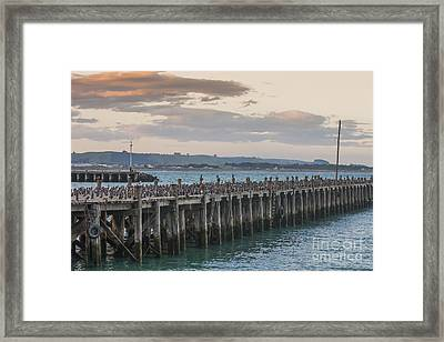 Cormorants On A Wooden Jetty Framed Print by Patricia Hofmeester