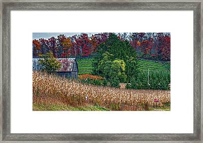 Corn And Ginseng On Poverty Hill Framed Print