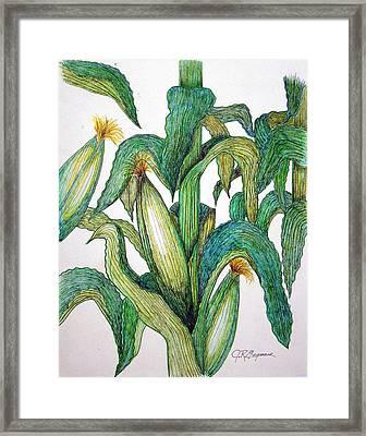 Corn And Stalk Framed Print