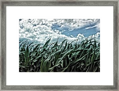Corn Field 1 Framed Print by Bonnie Bruno
