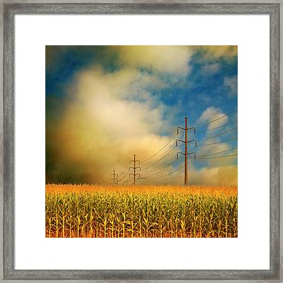 Corn Field At Sunrise Framed Print