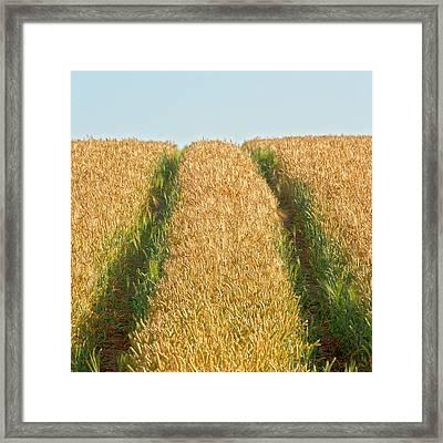 Corn Field Framed Print by Heiko Koehrer-Wagner