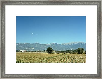 Corn Field With Terminillo II Framed Print