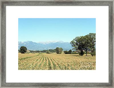 Corn Field With Terminillo Mount Framed Print