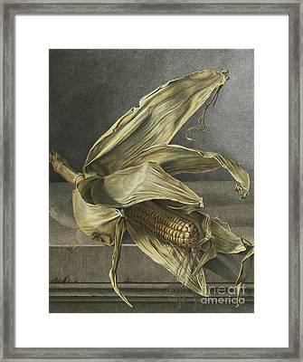 Corn Framed Print by Gerard van Spaendonck
