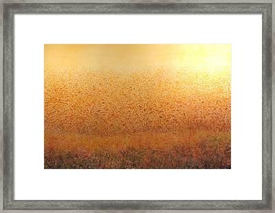 Corn Glow Framed Print