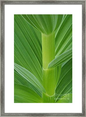 Corn Lily Stem Framed Print by Greg Vaughn - Printscapes