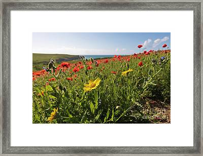Corn Marigold And Poppies Framed Print by Terri Waters