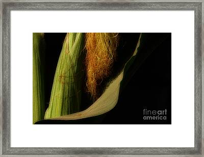 Corn Silk Framed Print