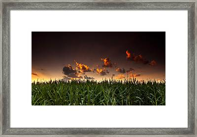 Corn Sunset Framed Print by Cale Best