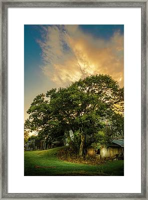 Corner Oak Framed Print by Marvin Spates