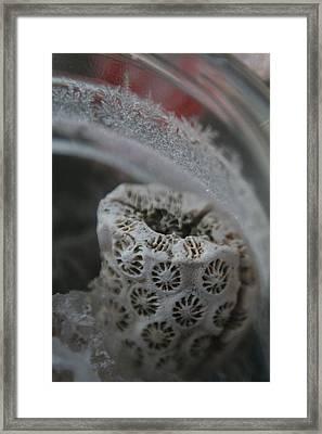 Cornered Coral Framed Print