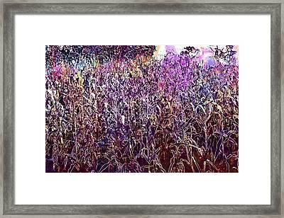 Cornfield Corn Field Cultivation  Framed Print
