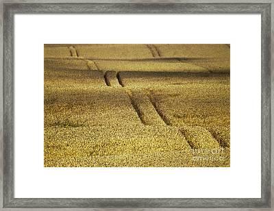 Cornfield Framed Print by Heiko Koehrer-Wagner