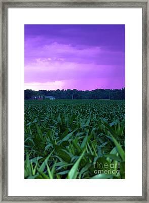 Cornfield Landscapes Purple Rain Framed Print by Cathy  Beharriell