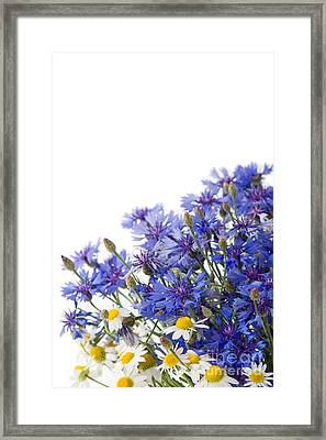 Cornflower And Chamomile Mix Of Flowers  Framed Print by Arletta Cwalina