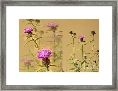 Cornflower Collage Framed Print by Donald Davis