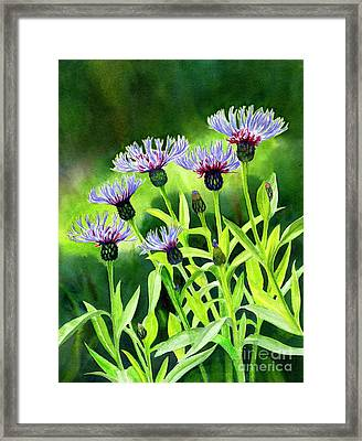 Cornflowers With Background Framed Print by Sharon Freeman