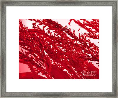 Cornstalk In Red Framed Print by Roxy Riou
