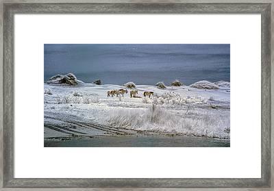 Corrola Wild Horses Framed Print