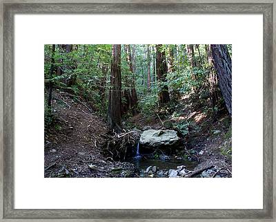 Corte Madera Creek Framed Print by Ben Upham III