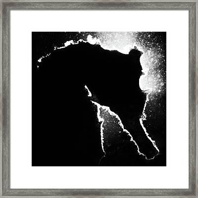Cortez Seahorse Framed Print
