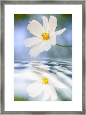 Cosmea Flower - Reflection In Water Framed Print by Silke Magino