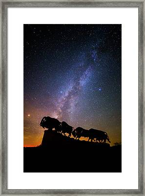 Cosmic Caprock Bison Framed Print by Stephen Stookey