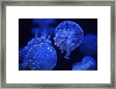 Cosmic Jellyfish 3 Framed Print