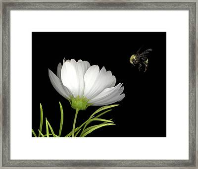 Cosmo And Bee Framed Print by Sandi F Hutchins