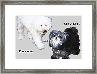 Cosmo And Meelah 2 Framed Print by Terry Wallace
