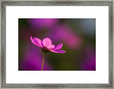 Cosmo Impression Framed Print by Mike Reid