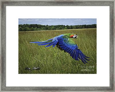 Cosmo In Flight Framed Print by Melissa Messick