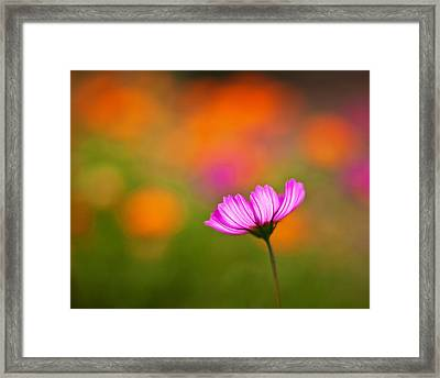 Cosmo Pastels Framed Print by Mike Reid