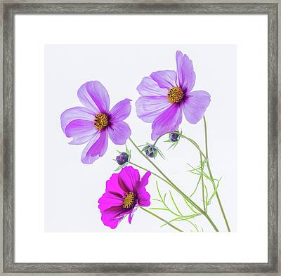 Cosmos Bright Framed Print
