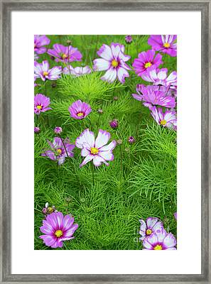 Cosmos Capriola Framed Print by Tim Gainey