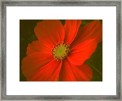 Cosmos Framed Print by Juergen Weiss
