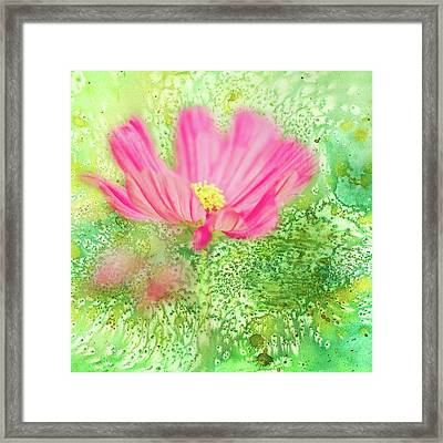 Cosmos On Green Framed Print