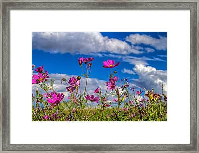 Cosmos Sky Framed Print